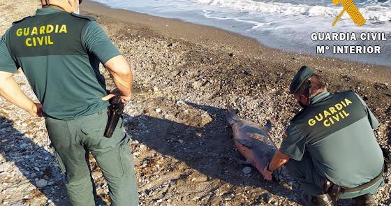 Más de 100 delfines y cetáceos varan este verano en las playas de Almería