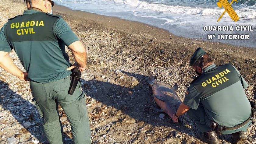 Dos guardias civiles, con un delfín varado.
