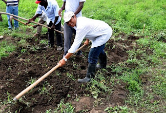 Photo: Joeli Barison - SRI trainier - is taking up the hoe to prepare a training plot for transplanting; Ferrier, Haiti, June 2010 [Photo by Erika Styger]