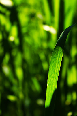 Green di stellab
