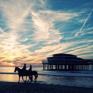 pier horse.jpg