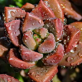 by Kari Schoen - Nature Up Close Other plants (  )