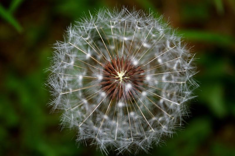 Esprimi un desiderio... di Edoardo Lidano