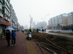 Photo: life and stills in benzrad 朱子卓's blog: winter 2011 stepping in with pure love.here long waited planting trees near QRRS Dorms, eastern Qiqihar after months of preparing in the broadening road operation. the winter drizzle added a soft touch onto the northeastern city.