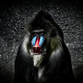 Mandrel-selective color by Bruce Newman - Digital Art Animals ( selective color, nature, animal, black and white,  )