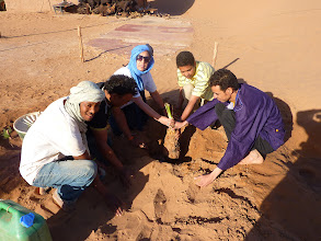 Photo: 1st palmtree planted in April 2012