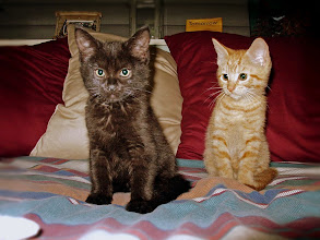 Photo: Murray and Symon as kittens