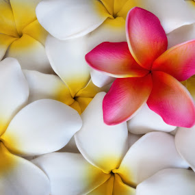 Plumeria by Ron Azevedo - Nature Up Close Flowers - 2011-2013