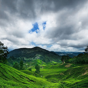Cameron Highlands, Malaysia by Stanley Loong - Landscapes Mountains & Hills ( day view, clouds, cameron highlands, green, malaysia, tea farm, daylight,  )