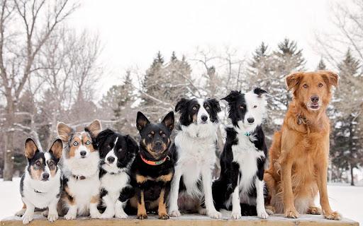 無料生活Appのかわいい犬のライブ壁紙|記事Game