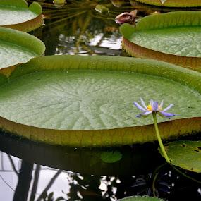 by Kris Van den Bossche - Nature Up Close Other plants (  )