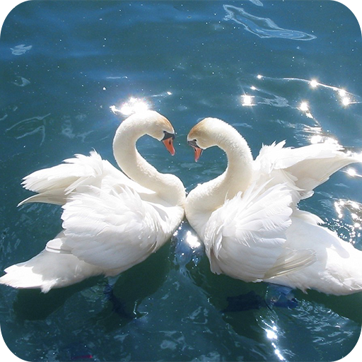 Swan Wallpapers 個人化 App LOGO-硬是要APP