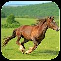Thoroughbred Horse icon