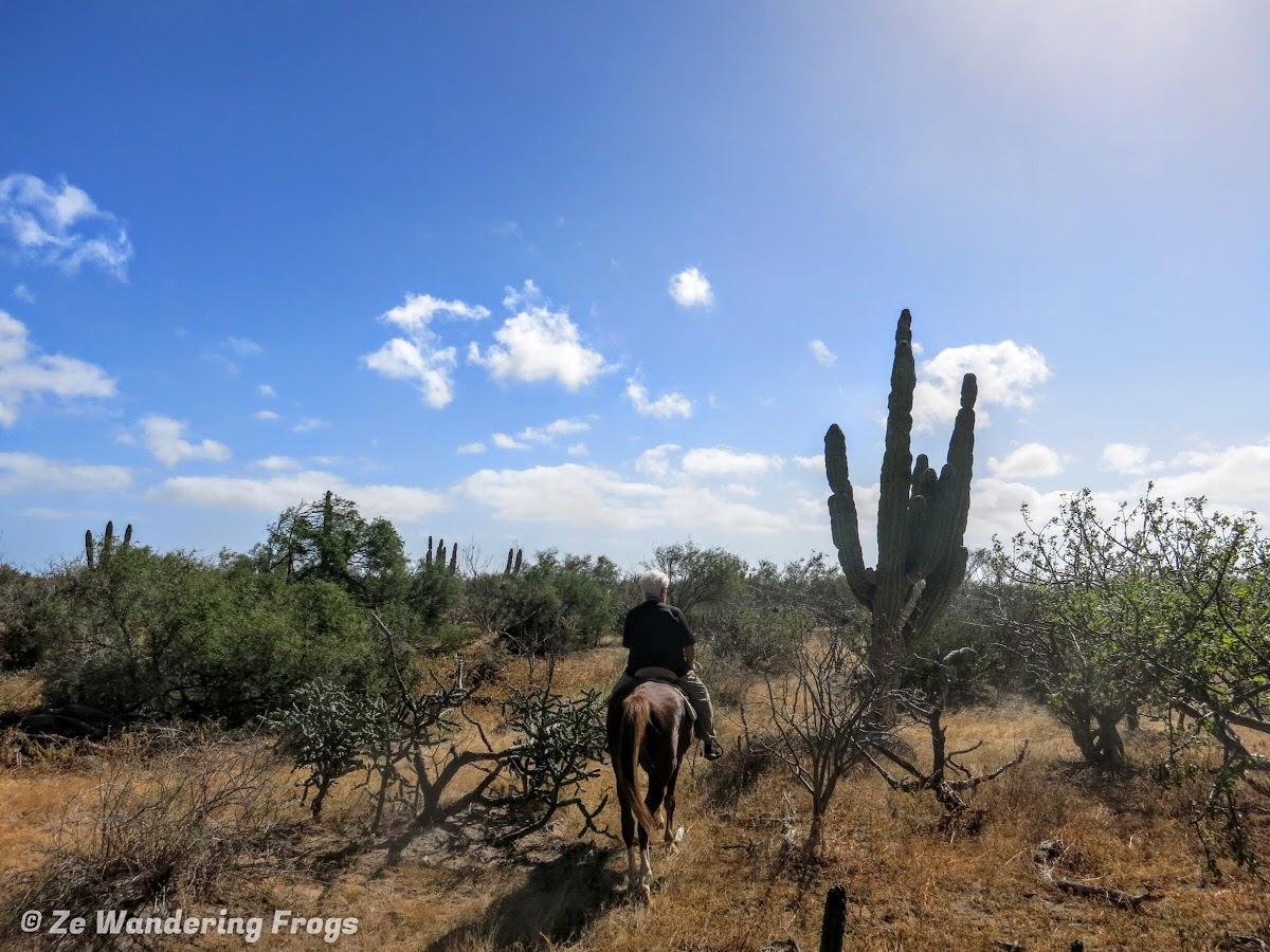 Horseback riding through cacti