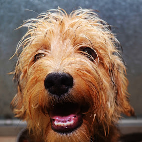 Patootie by Michael Cowan - Animals - Dogs Portraits ( shelter, adopt, dog,  )