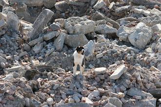 Photo: Canine Alerts