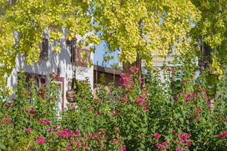 Photo: Yet There is Green - Hardy bougainvillia vines with scarlet flowers decorate a business lucky to have a few trees on Grand Avenue make lush composition in the desert of Phoenix, Arizona.