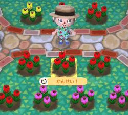 チューリップを咲かせている画像