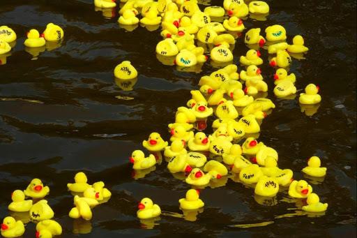 La Duck Race - une course caritative sur l'Allier !