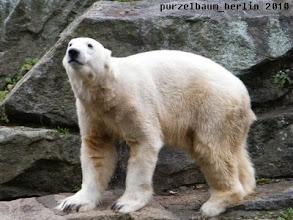 Photo: Knut schaut erwartungsvoll ;-)