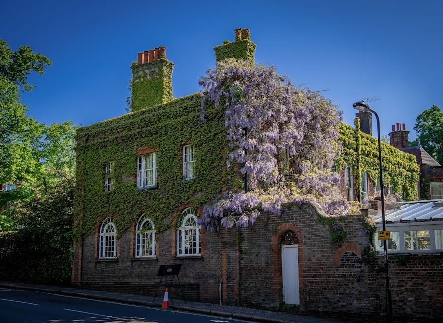 a house in vines by Gene Beeking - Buildings & Architecture Homes ( an old house, london, hampstead, georgian architecture, vines )