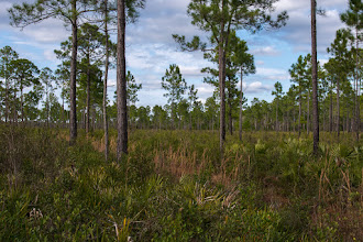 Photo: Inside Jones Island; Lake Woodruff NWR