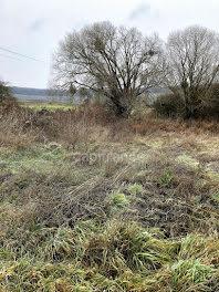 terrain à Marfaux (51)