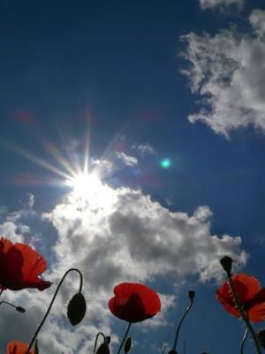 Il sole all'improvviso di carlo fierro