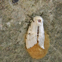 European gypsy moth