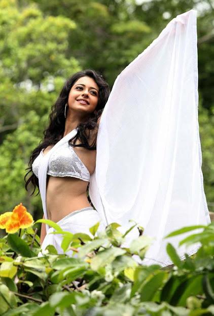 Rakul Preet Singh in white saree, Rakul Preet Singh HD Wallpaper