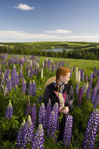 A girl dressed as Anne of Green Gables holding lupins on Prince Edward Island.