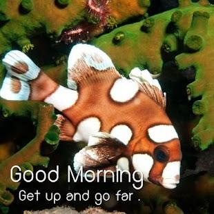 Krásné dobré ráno obraz - náhled