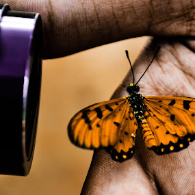 from my camera by Deependra Bapna - Animals Other ( butterfly, color )