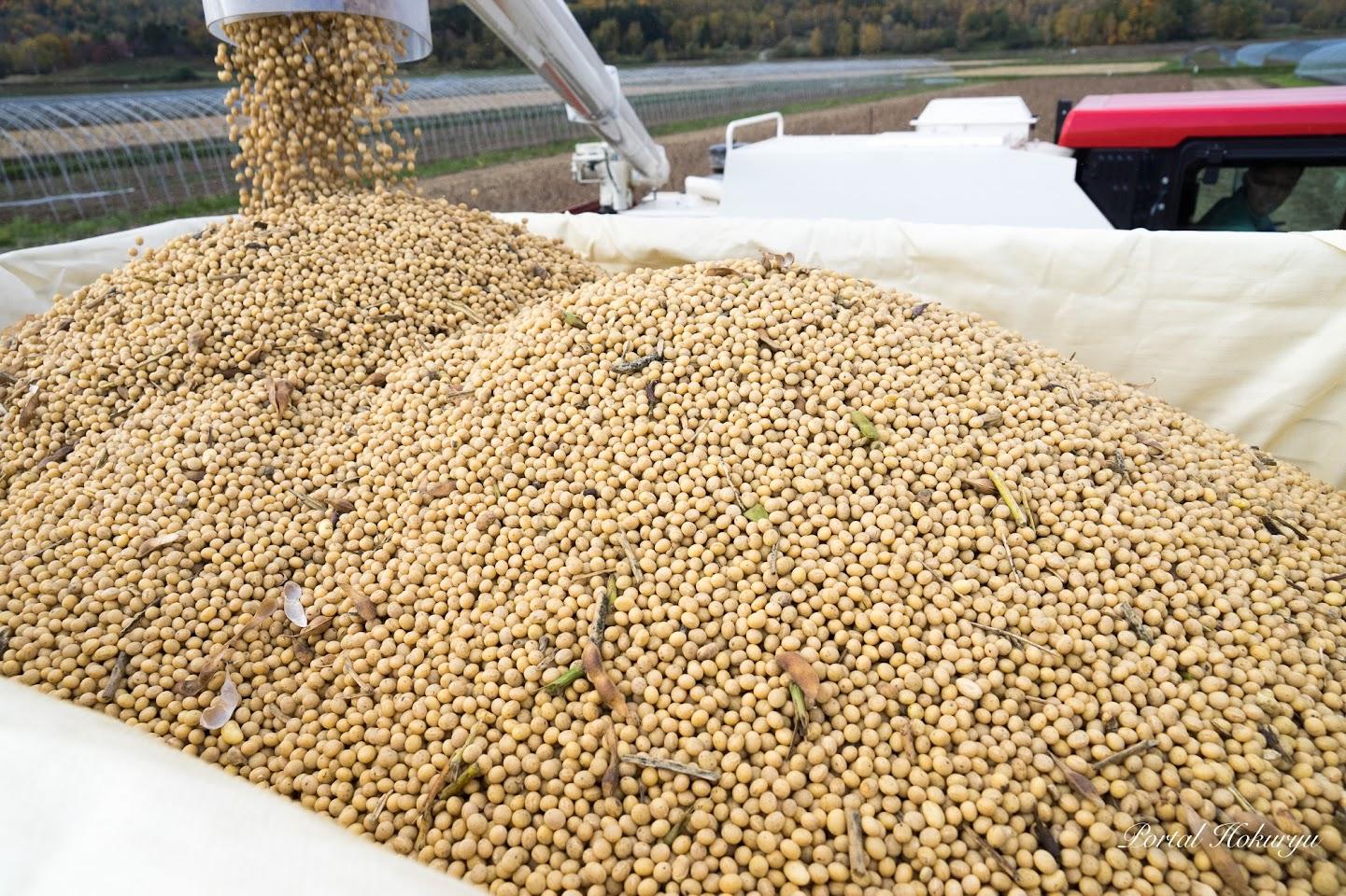 収穫したばかりの大豆