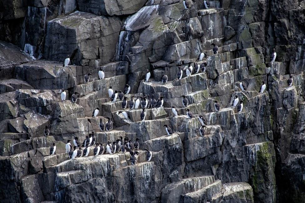 ptaki, Szkocja