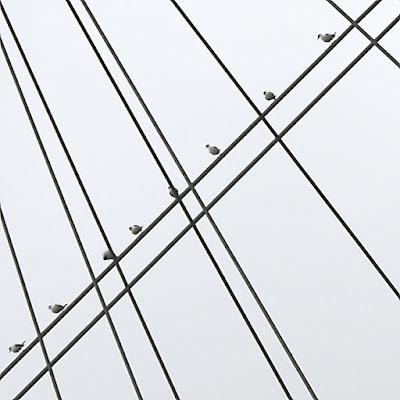 Angry Birds di Alessandro Remorini