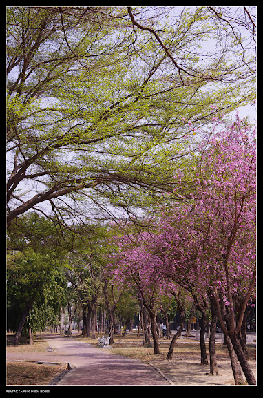 春天到了-中正公園隨手拍