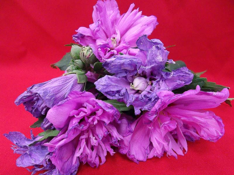 Io devo forse ai fiori l'essere diventato pittore. (Claude Monet) di Furlissima