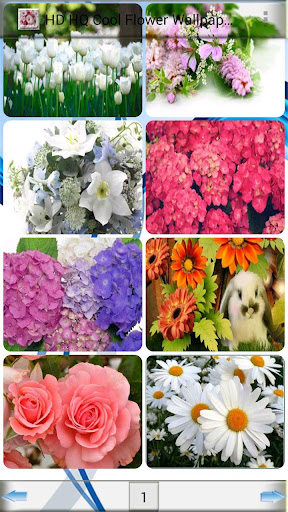 HD HQ Cool Flower Wallpapers