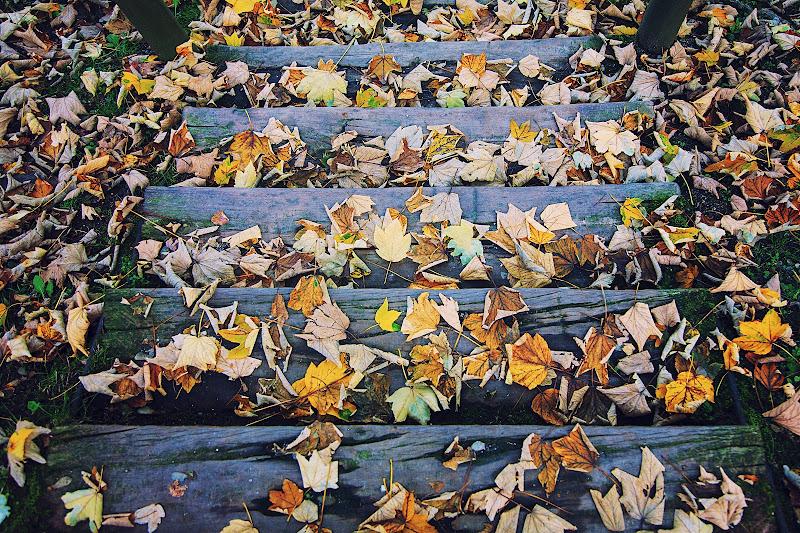 Hello Autumn! di Jackass1991