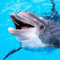 The Dolphin icon