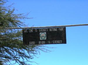 Photo: Serengeti - yksi pääkohteistamme