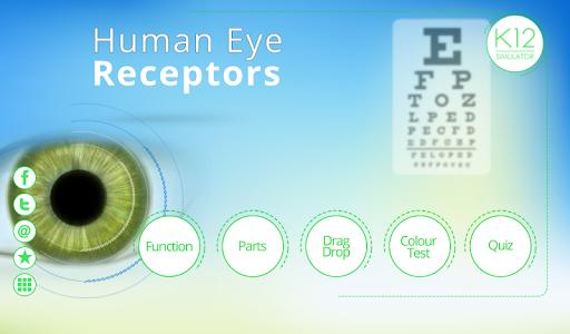 Human Eye Receptor