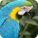 Parrot Bird Live Wallpaper icon