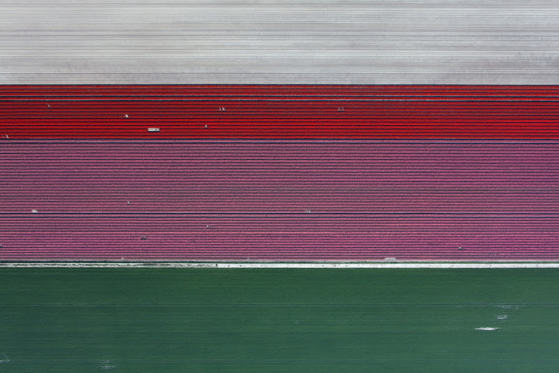 Tulips by Julian Faulhaber
