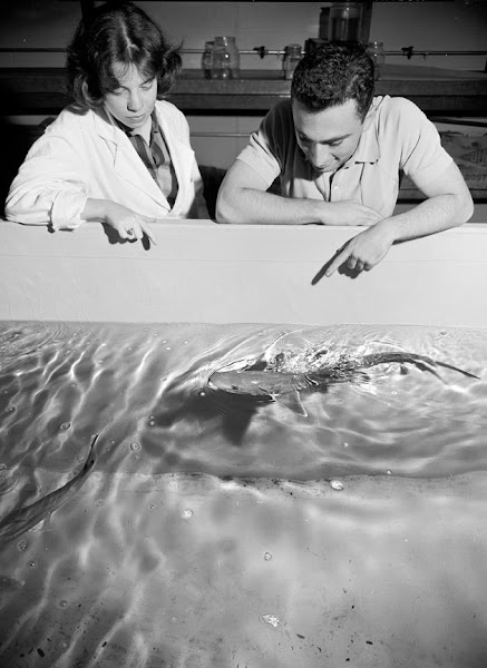 Photo: On July 20, 1961, photos were taken of new facilities at the biology lab. (They're going to need a smaller boat.)