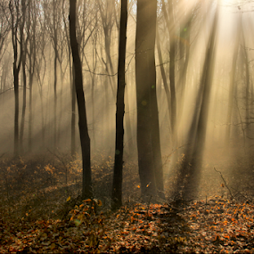 Dream by Comsa Bogdan - Landscapes Forests ( forests, dream, nice, romania, forest, landscape, sunlight, the dream, photography, sun, brasov, gorgeus, fog, rise, comsa bogdan, trees )