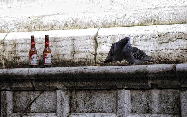 Bevi qlc? di Saio