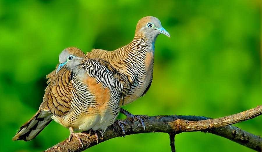 by CK Jack - Animals Birds