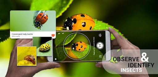Insect identifier App by Photo, Camera 2019 - Apps on Google Play